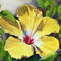 Yellow Hibiscus by Robert Thomaston
