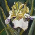 Yellow Iris by Gloria Smith
