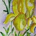 Yellow Iris by Kathy Mitchell