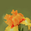 Yellow Iris Pillow by Lisa Cassinari