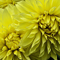 Yellow by Ryan McIntyre