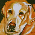 Yellow Lab Amazing Grace by Susan A Becker