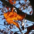 Yellow Leaf 1 by Jeff Breiman