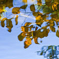 Yellow Leaf Reflections by Bill Brennan - Printscapes