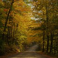 Yellow Leaves Road by Mark Schiffner