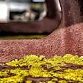 Yellow Lichen by Russ Dixon