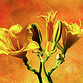 Yellow Lilies by Ericamaxine Price