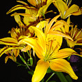 Yellow Lilies by Joanne Smoley