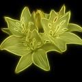 Yellow Lilies On Black by Sandy Keeton