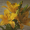 Yellow Lilies With Old Canvas Texture Background by Vesela Yokova