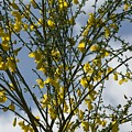 Yellow Little Flowers by Sara Stevenson