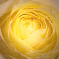 Yellow by Magda Levin-Gutierrez