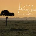 Yellow Mara Dawn by Karen Lewis