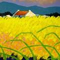 yellow Meadow Ireland by John  Nolan