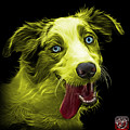 Yellow Merle Australian Shepherd - 2136 - Bb by James Ahn