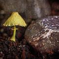 Yellow Mushroom by Jim Ziemer