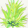 Yellow Octopus Agave by Kate LeVering
