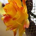 Yellow-orange Flower by Sonya Staneva