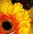 Yellow-orange by Kimberly Mohlenhoff