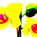 Yellow Orchids Abstract by Beth Akerman