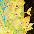 Yellow Orchids With Black Screen by Sharon Nelson-Bianco
