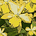 Yellow Orchids Woodcut by Ann Tracy