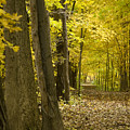 Yellow Path by Ryan  Krueger