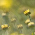 Yellow by Paul Schreiber