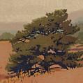Yellow Pine by Dan Miller