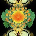 Yellow Poppy by Bruce Frank