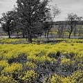 Yellow Prairie I by Dylan Punke