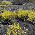 Yellow Prairie II by Dylan Punke