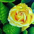 Yellow by Ramneek Narang