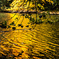 Yellow Reflection by James Holt