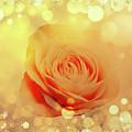 Yellow Rose And Joy by Johanna Hurmerinta