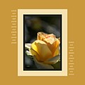 Yellow Rose Bud Dreams With Design by Joy Watson