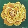 Yellow Rose by Esperanza Arato