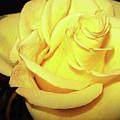 Yellow Rose For Friendship by Jolanta Anna Karolska