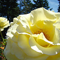 Yellow Rose Garden Landscape 3 Roses Art Prints Baslee Troutman by Baslee Troutman