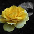 Yellow Rose In Bloom by Smilin Eyes  Treasures