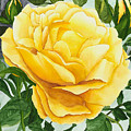 Yellow Rose by Robert Thomaston