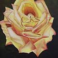 Yellow Rose by Silvia Philippsohn