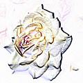 Yellow Rose by Tim Allen