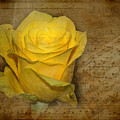 Yellow Rose With Old Notes Paper On The Background by Vesela Yokova