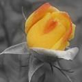 Yellow Rosebud Partial Color by Smilin Eyes  Treasures