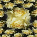 Yellow Roses 2 by Tim Allen
