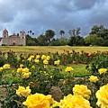 Yellow Roses And Dark Sky by JoJo Brown