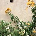 Yellow Roses And Tiny Window At Carmel Mission by Carol Groenen