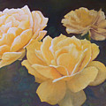 Yellow Roses by Steve Patton