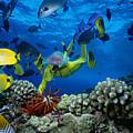 Yellow Scuba Diver by Ed Robinson - Printscapes